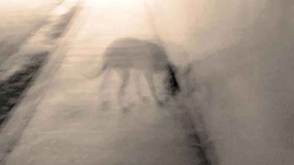 StStorie di fantasmi animali