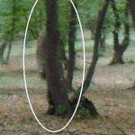 Hoia Baciu e gli spiriti della foresta