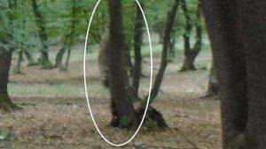 Hoia Baciu e gli spiriti della foresta misteriosa in Transilvania