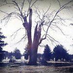 Il cimitero e l'albero maledetto. Una gita finita male