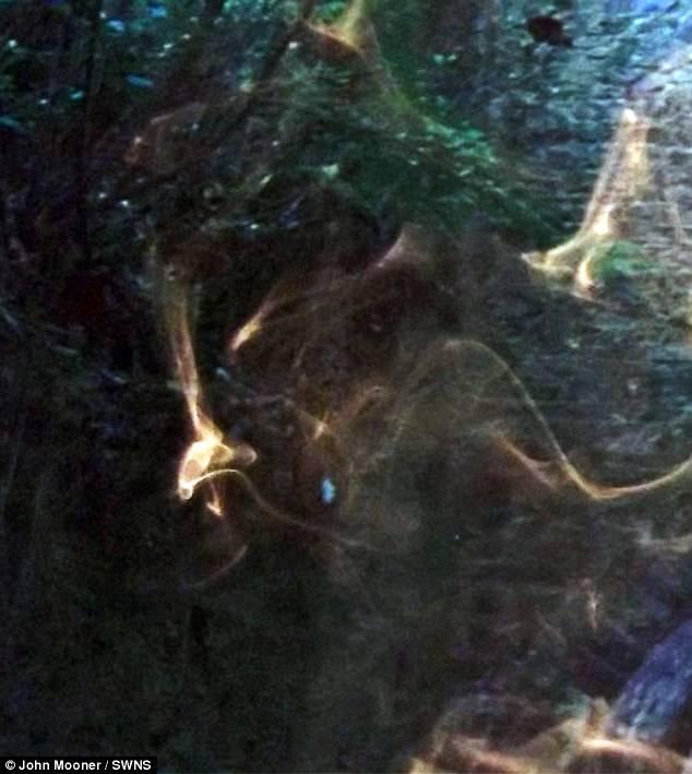 E' il fantasma di Robin Hood Fotografato lo spirito del bandito di Nottingham (2)
