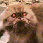 Animali posseduti dagli spiriti maligni